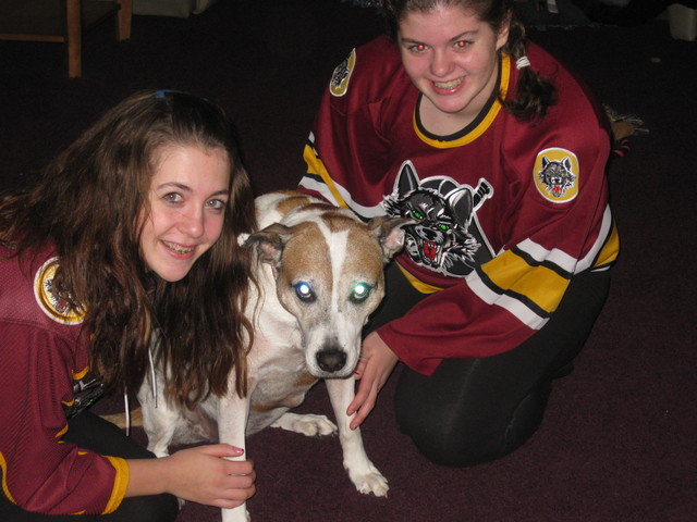 <p>Bailey was one of the dogs adopted as part of the Chicago Wolves&#39; Adopt-A-Dog program.</p>