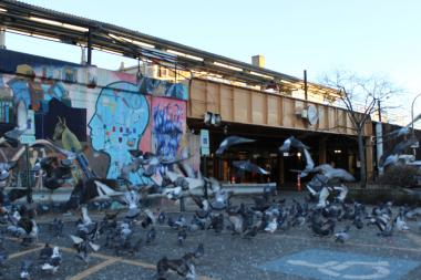 Ald. James Cappleman (46th) said after Wednesday's City Council meeting that he's preparing a new ordinance that greatly stiffens fines for feeding pigeons to $1,000 and includes jail sentences of up to 30 days.