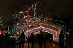 Walk to Zoolights at the Lincoln Park Zoo (Dinner too)