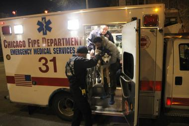 Firefighters pulled Zeus from the frigid waters of Lake Michigan on New Year's Day 2013.