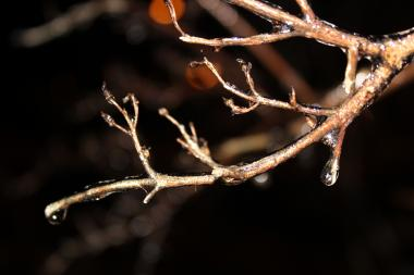 A tree branch encased in ice Sunday night in Uptown. A spat of freezing rain left Chicago's streets and sidewalks with an icy glaze. Forecasters expect the ice to melt away my Monday morning's commute.