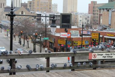 A flock of pigeons hangs out on the Wilson 'L' platform in Uptown.