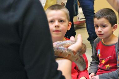 The Chinese-American Museum of Chicago and the Peggy Notebaert Nature Museum in Lincoln Park have teamed up to bring an exhibit of venemous snakes to the nature museum as part of a celebration of the Chinese New Year — the Year of the Snake.