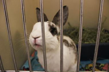 The Red Door Animal Shelter is campaigning for pet stores to stop selling rabbits around Easter.
