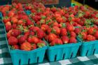 Bridgeport Farmers Market Opens Saturday