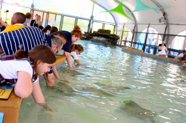 Touch a yellow or cownose ray at the new Shedd Aquarium exhibit.