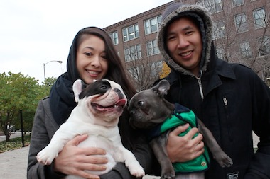 Manny the Frenchie hangs with his owners and his younger brother, Frank, at the West Loop Dog Park.