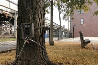 A camera trap is installed by Lincoln Park Zoo's Urban Wildlife Institute at an undisclosed location in Lincoln Park. The institute has 41 camera traps installed within city limits.