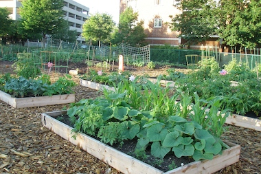 Dunning Community Garden Offering Plots To Gardeners