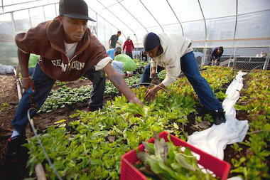 Community gardeners to converge on chicago for national for American garden association