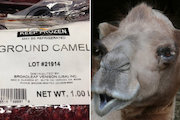Have You Eaten a Camel's Hump? It's Mariano's Latest Exotic Meat
