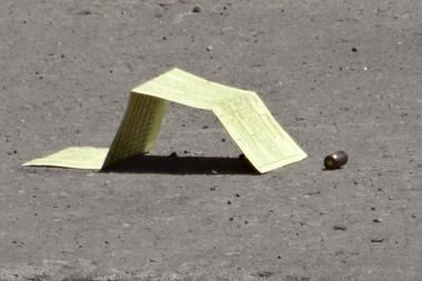 Grand Crossing Shooting Kills Man