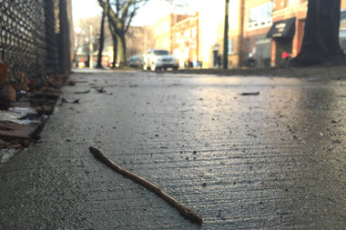 Why Do Worms Appear on Sidewalks When It Rains?