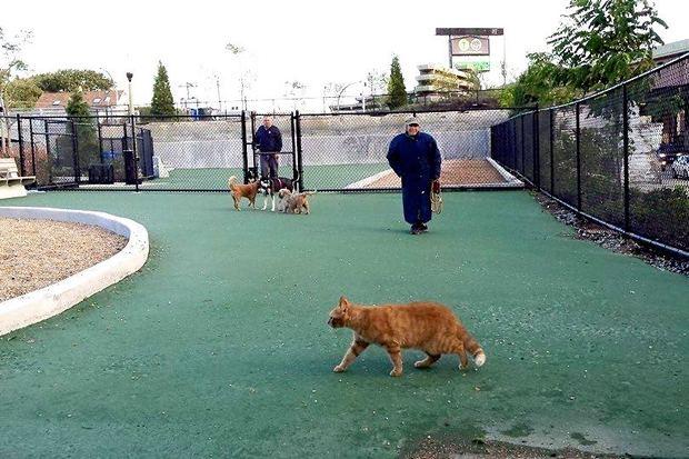 Dog Parks In Bucktown Chicago