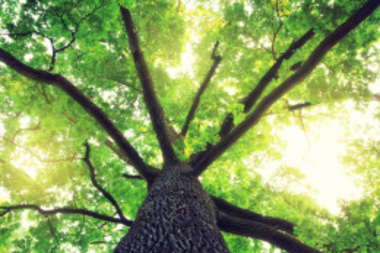 Faith Organizations Unite in Joint Sustainability Efforts