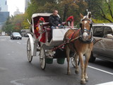 Advocates to Hold Candlelight Vigil for Dead Carriage Horse