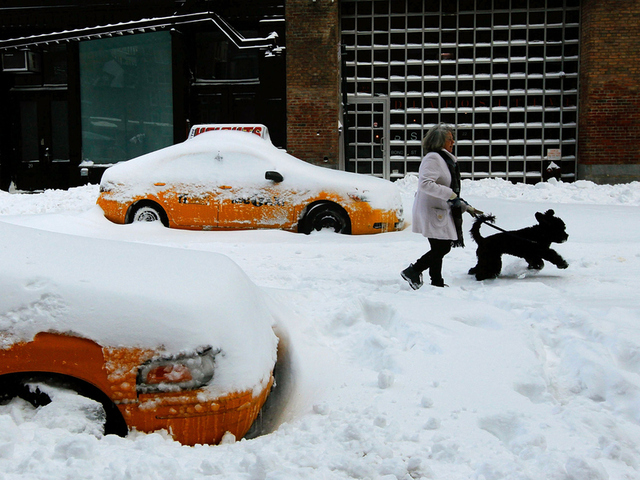 <p>A woman walks her dog between snowed-in taxicabs in Manhattan&#39;s Greenwich Village following a major blizzard Dec. 27, 2010.</p>