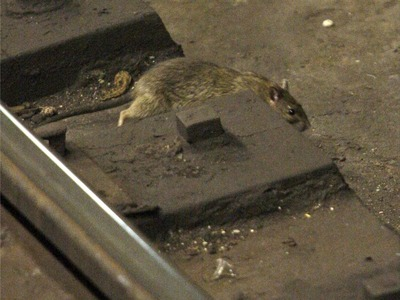 Scott Stringer said city budget cuts to the Health Department have led to a rampant rodent problem.