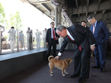 New East River Waterfront Park Goes to the Dogs