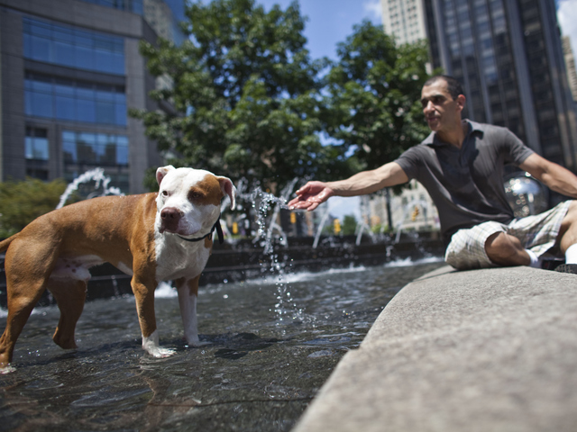 Herb Nieves and his dog Max, a red nose pit bull, cool out in the Columbus Circle fountain during a heat wave.