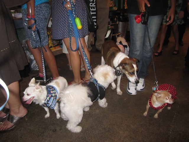 Dogs played at The Salty Paw's fourth annual Puppy Prom Aug. 9, 2011.