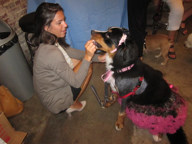 Holly, a Burmese Mountain Dog, with owner Kristen Tyburski