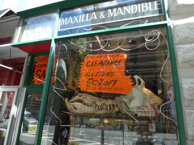 Maxilla & Mandibles closed its store at 451 Columbus Avenue at the end of August 2011. It was replaced by Rubicon Realty in 2012.