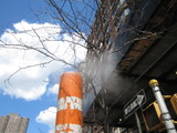 Con Ed Steam Kills TriBeCa Trees, Advocate Says