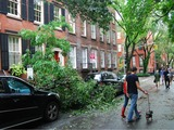 Flood and Tree Damage Throughout Manhattan