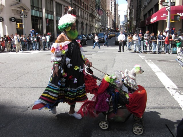 One man made sure that his pet dog was properly dressed for the Mexican Independence Day Parade on Madison Avenue on Sept. 18, 2011.