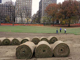 Central Park's East Meadow to Re-Open