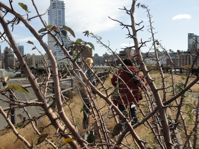 Visitors brave the brambles on this undeveloped section of the High Line during an Open House New York tour on Oct. 16, 2011.