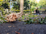 Storm Damages 1,000 Central Park Trees