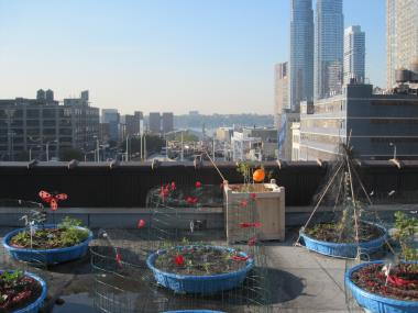 The kiddie pools used to grow fresh vegetables, on the roof of a church between the Port Authority Bus Terminal and the Lincoln Tunnel.