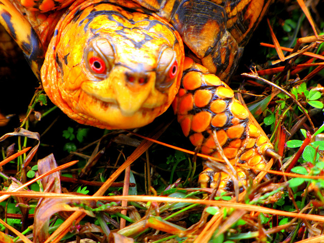 The turtle is one of many animals that have escaped from their homes throughout the city this year.