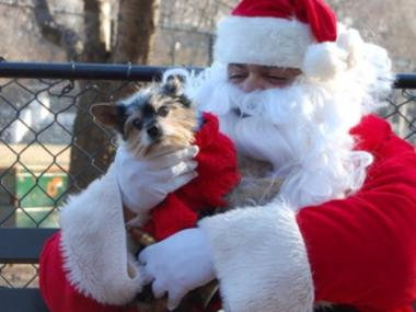 Santa and a cute pooch.