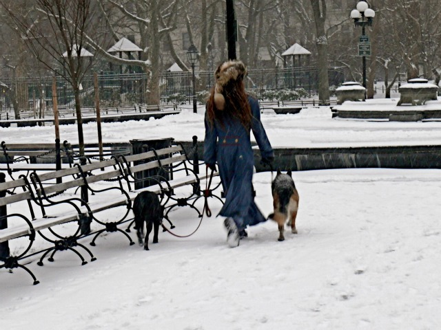 <p>Walking dogs through the snow in Washington Square Park on Sat., Jan. 21, 2012.</p>