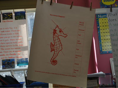 <p>Children at P.S. 187, a popular zoned school, learn about seahorses.</p>