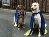 'Paw-rade' Against Village Dog Run Move Part of Anti-NYU Expansion Rally