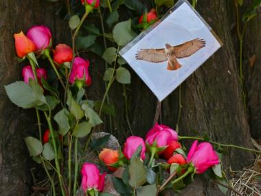 Lima's fans have already set up a memorial to her by the tree in Central Park where she was found dead on Feb. 26, 2012.