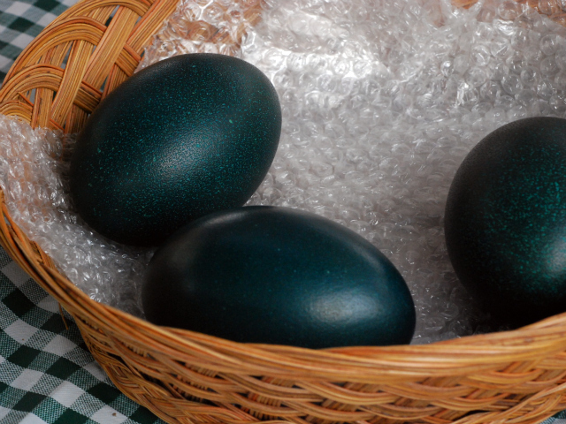 A basket of emu eggs at the Union Square Market