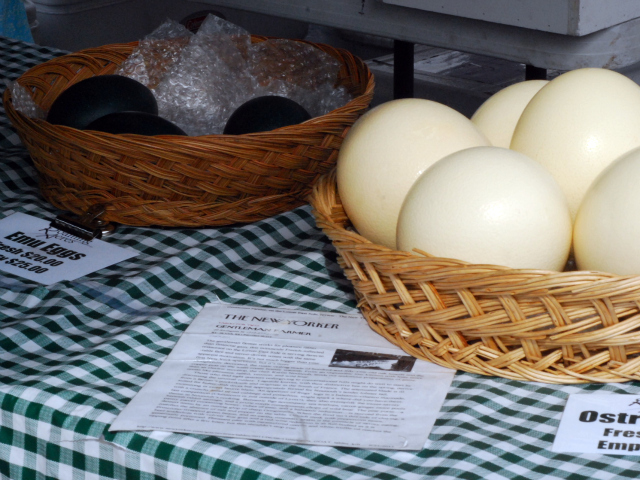 The ostrich and emu eggs attract a lot of attention.