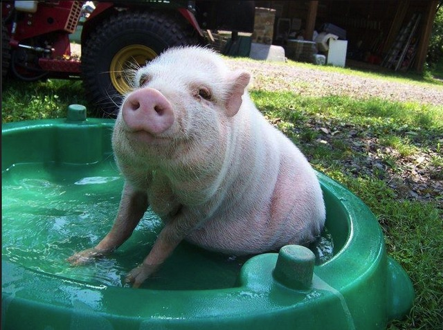 Anna Gristina loved to post photos of pigs on both her's and her son's Facebook page.