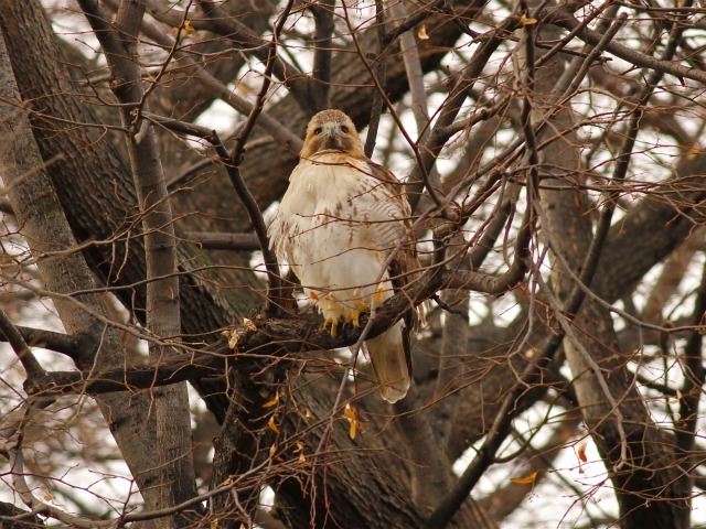 Bird lovers are mourning a Riverside Park hawk whose body was found on March 9, 2012.