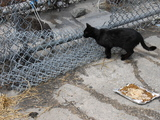 Feral Cat Colony May be Forced to Relocate by Greenpoint High-Rises