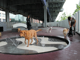 Pet Owners Pooh Pooh Dirty New East River Dog Run