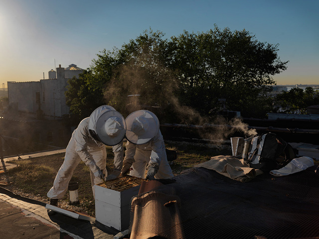 Beekeepers at a garden Hunts Point. This photo by Nina Berman is part of her exhibit