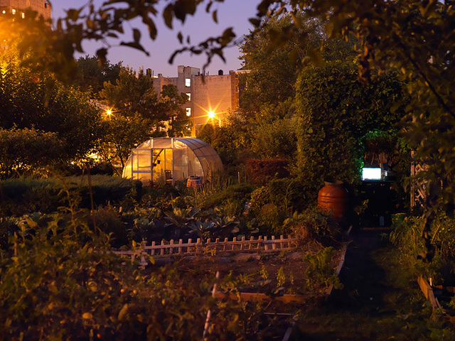 Taqwa Community Farm in Highbridge. This photo by Nina Berman is part of her exhibit