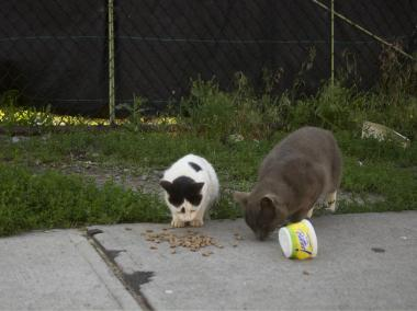 Cats emerge from construction site to eat.