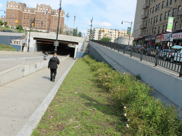Rosebushes were recently uncovered along the 161st Street underpass.